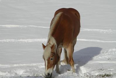 Horses are also very happy out in the snow