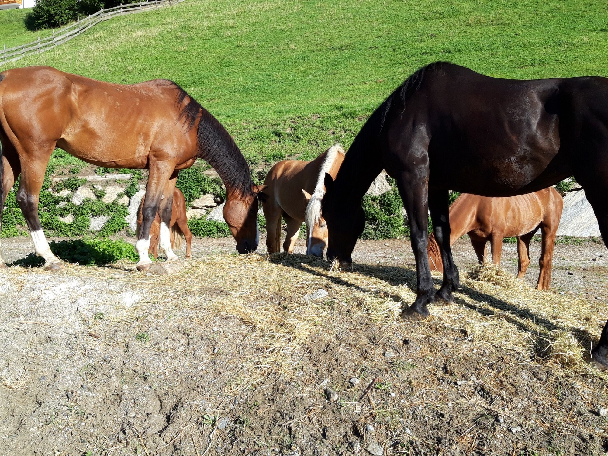 All-day trail rides in Pfitschertal, Sterzing